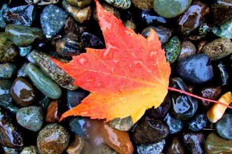 Raining Color (Highland)
