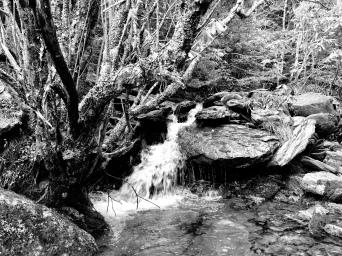 Mount Mitchell b and w (Highland)