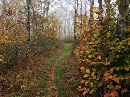 Blue Ridge Autumn Trail (Highland)