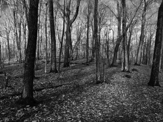 Forestlight3 (Highland)