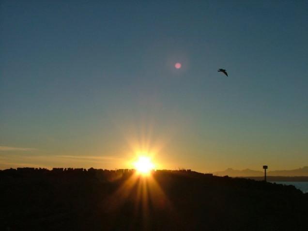 Olympic Sun (Highland)