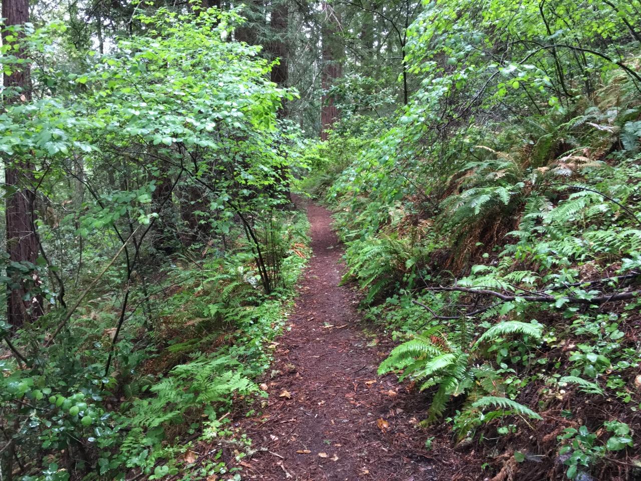 A Clearer Path
