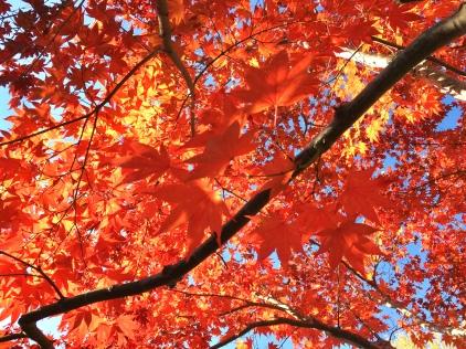 Autumn Light (Highland)