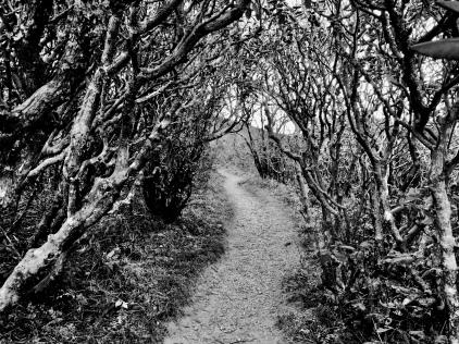 Blue Ridge Path (Highland)