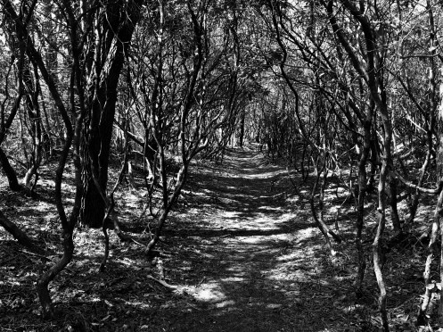 Into the Shadows (Highland)