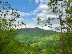 Blue Ridge Springwalk (Highland)