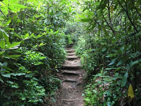 Pisgah Path, Blue Ridge (Highland)