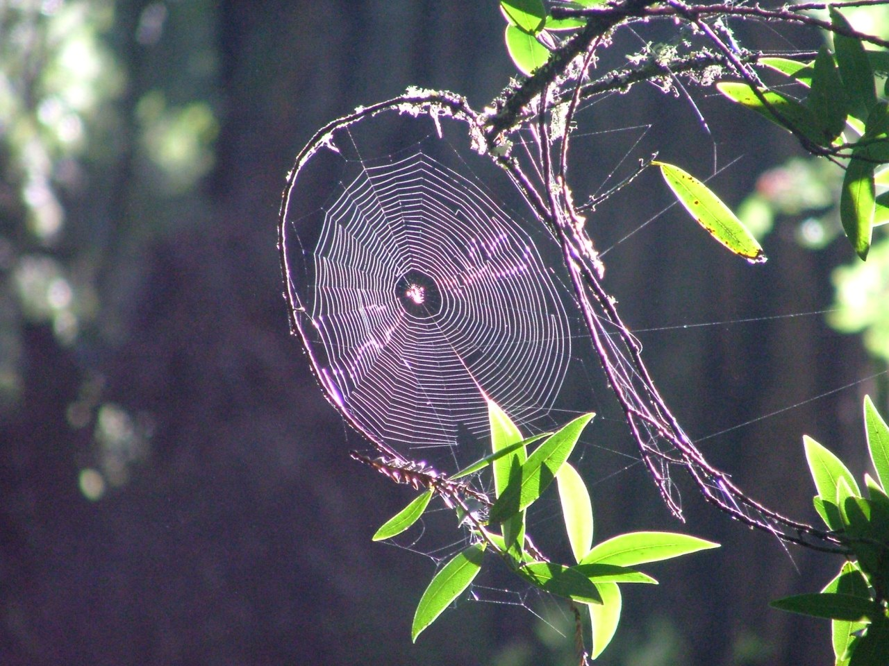 The Path as a Web ofPaths