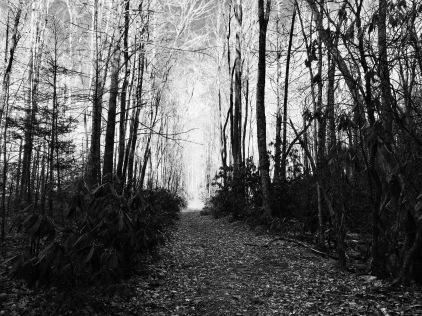 Great Smokies Light Trail