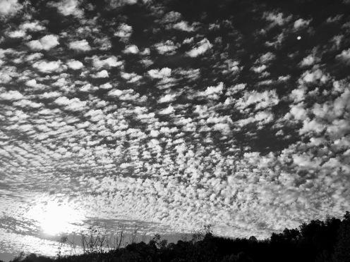 Carolina Sky1