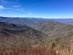 Wild Views