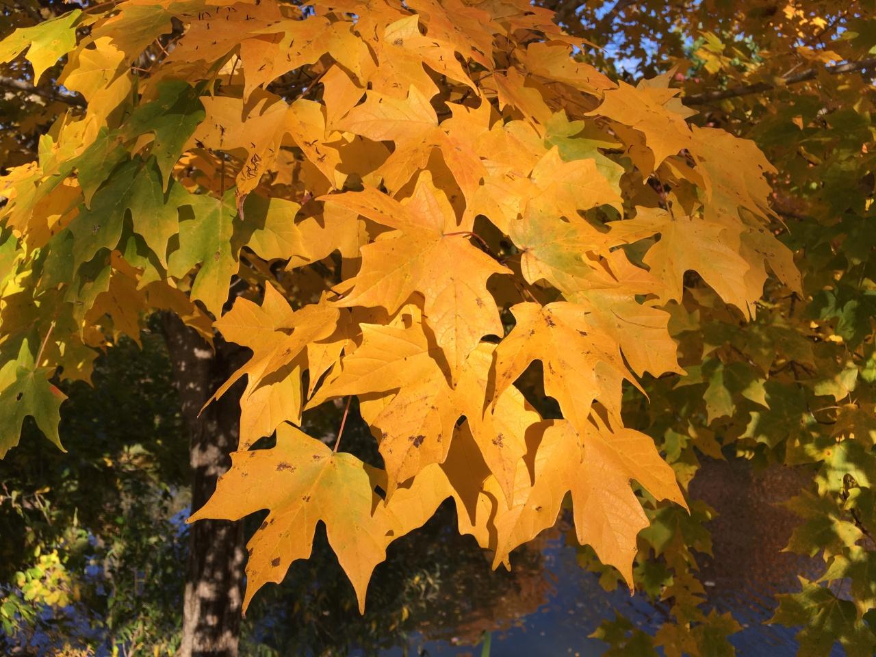 Hallow-autumn