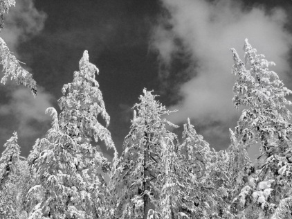 March 2008 icetrees