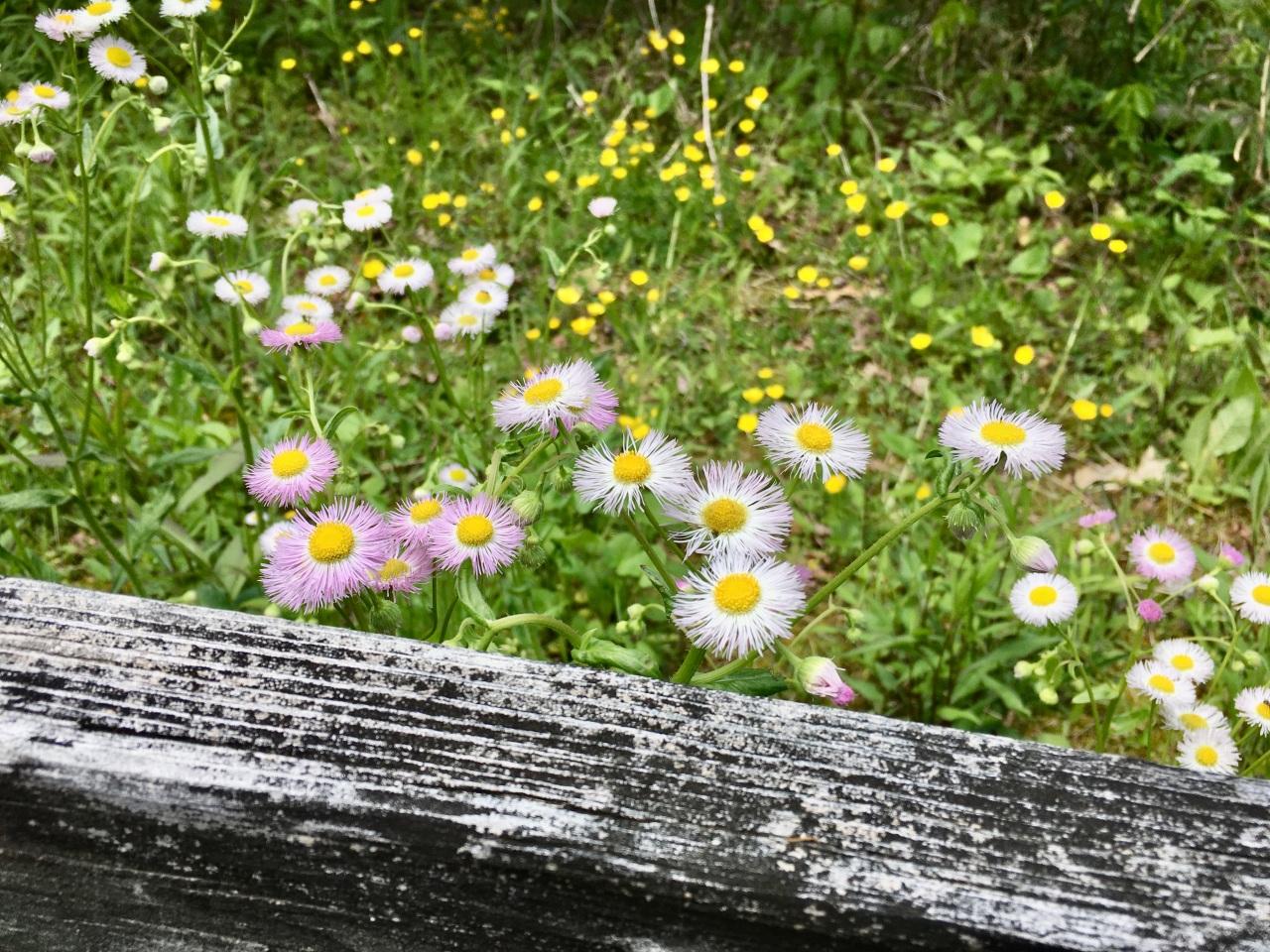 Nature Naturally Nurtures