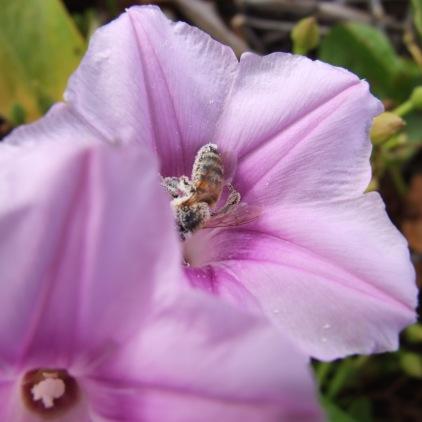 Kauai 2009 029
