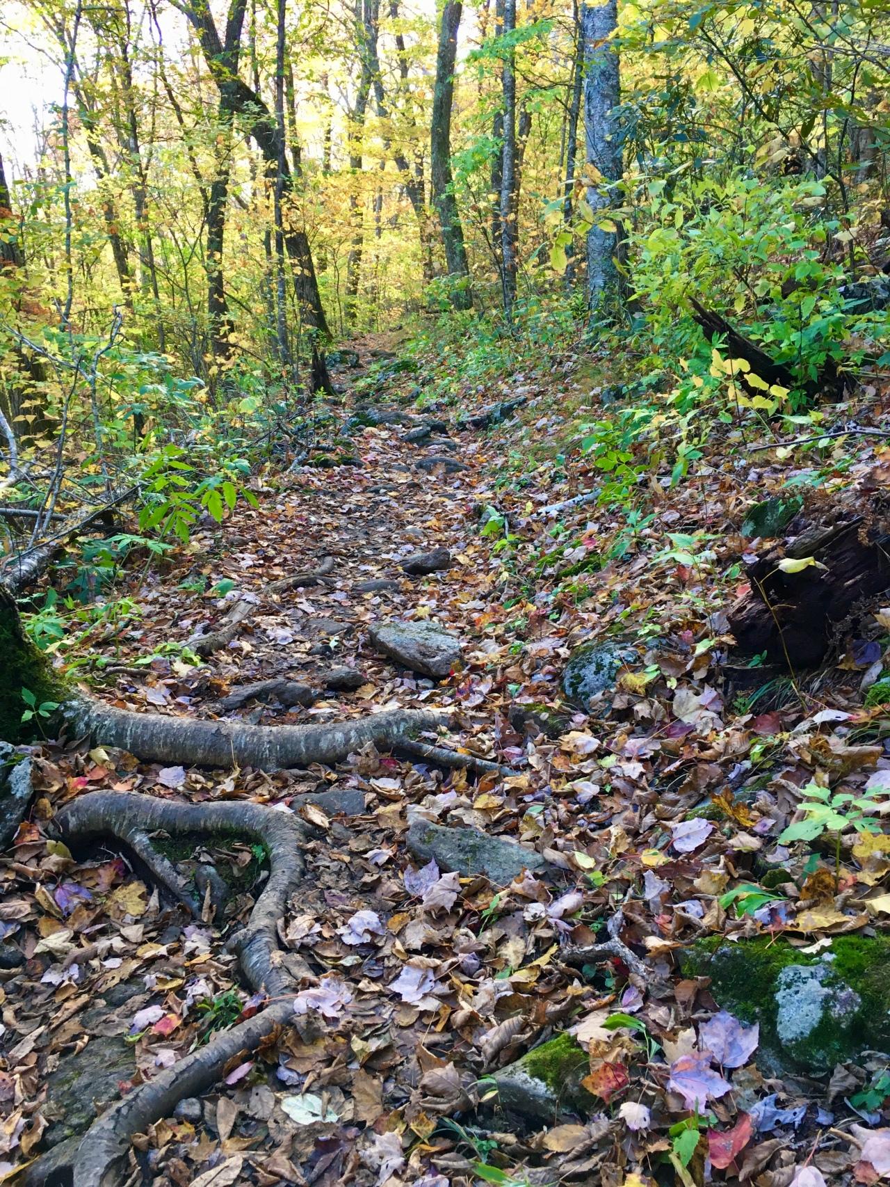 Blue Ridge Walk