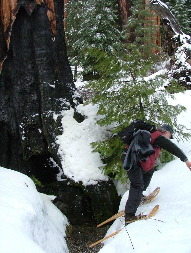 Sequoias05 012