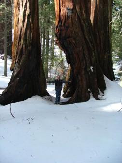Sequoias05 063