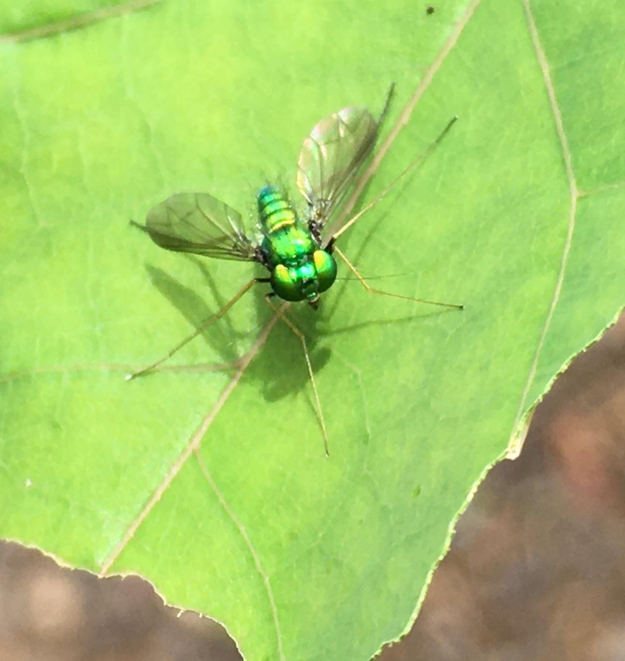 Beauty Fly